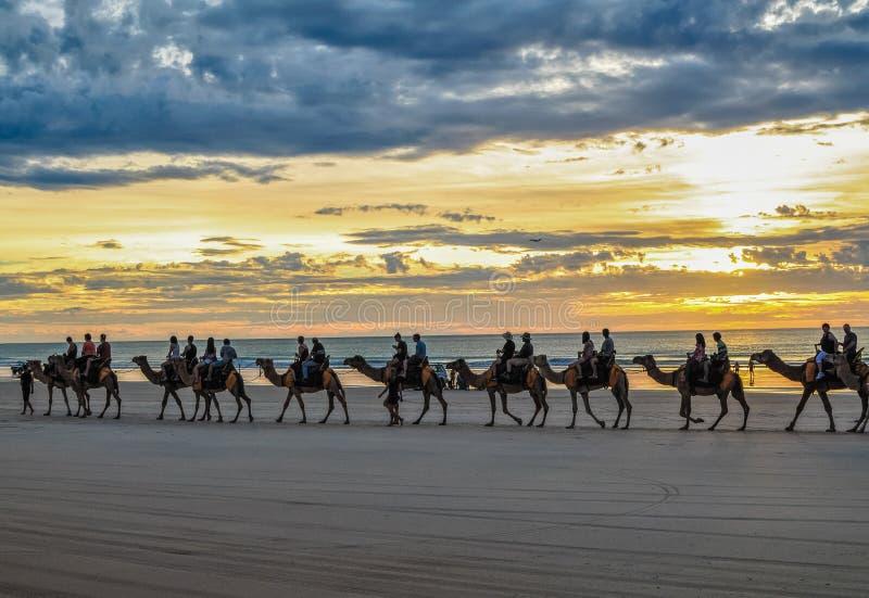 Touristes montant des chameaux photographie stock libre de droits