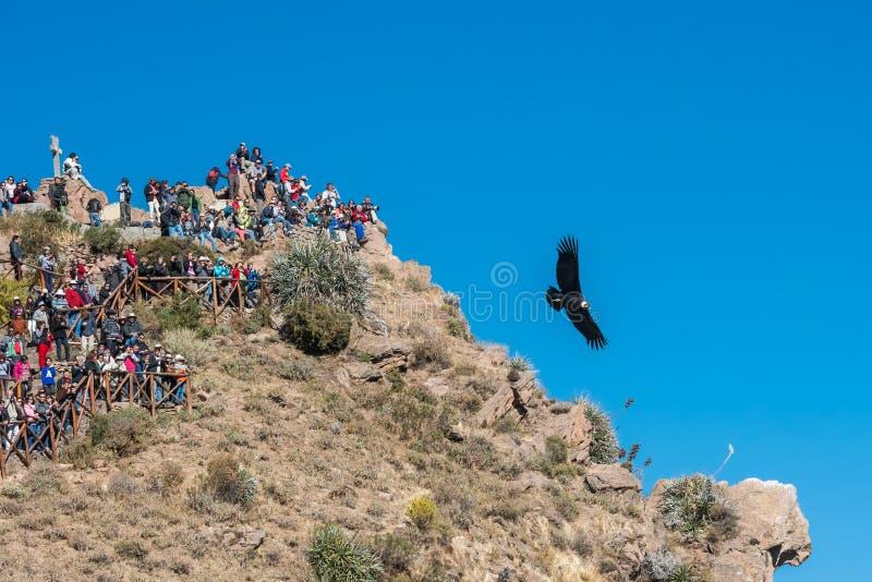 Touristes observant des condors dans le canyon Arequipa Pérou de Colca photographie stock libre de droits