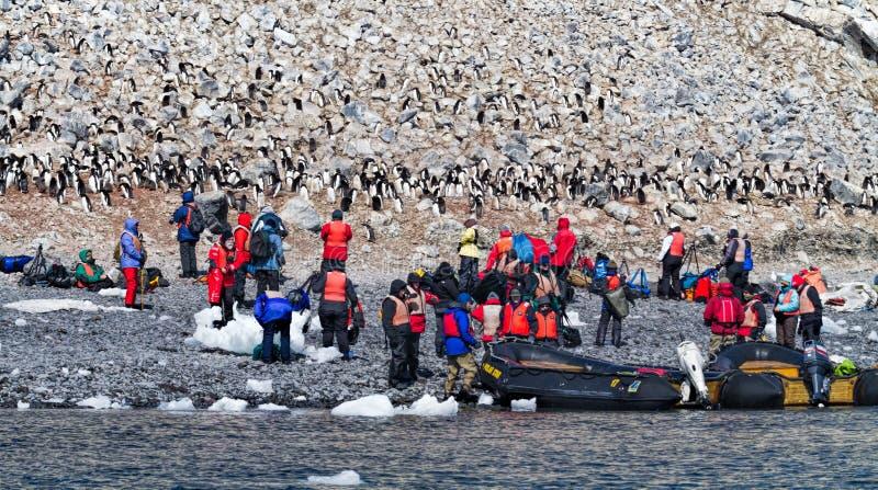 Touristes photographiant des pingouins photo stock