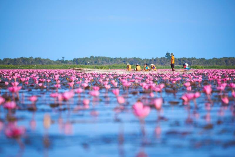 Touristes sur le bateau de longue queue dans le domaine du lotus rose images libres de droits