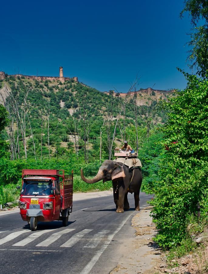 Touristic elephants in Rajasthan India royalty free stock photos