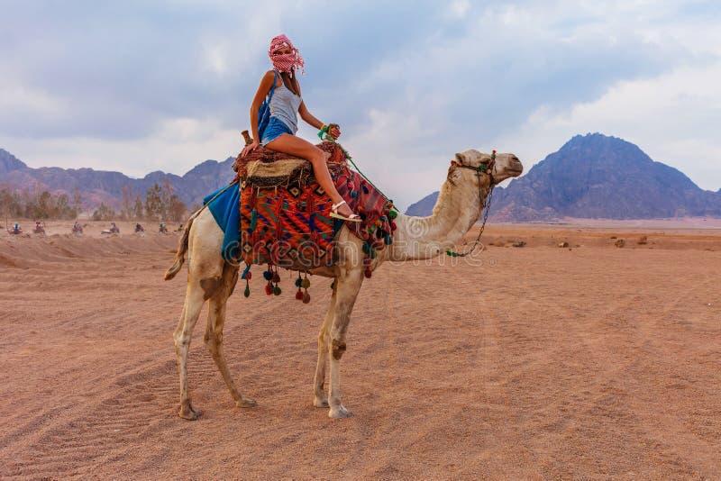 Touristische Frau in der traditionellen arabischen Kleidung mit Kamel in der Sinai-W?ste, Sharm el Sheikh, Sinai-Halbinsel, ?gypt lizenzfreie stockbilder
