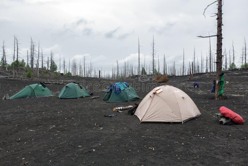 Touristische Zelte, die im toten Holz auf Halbinsel Kamtschatka stehen stockfotos