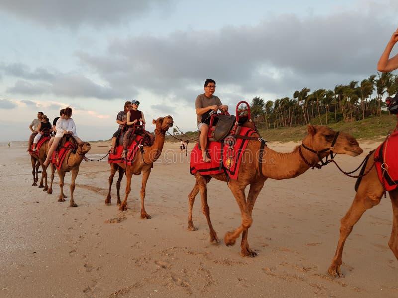 Touristischer Kamel-Fahrkabel-Strand Broome stockbild