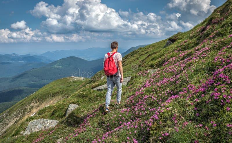 Touristischer Reisendmann macht Gebirgsaufstiegs-Reisesommer mit Rucksack Feriennaturrue im Freien lizenzfreie stockfotografie