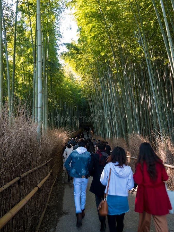 Touristisches Gehen in Bambuswald stockfoto
