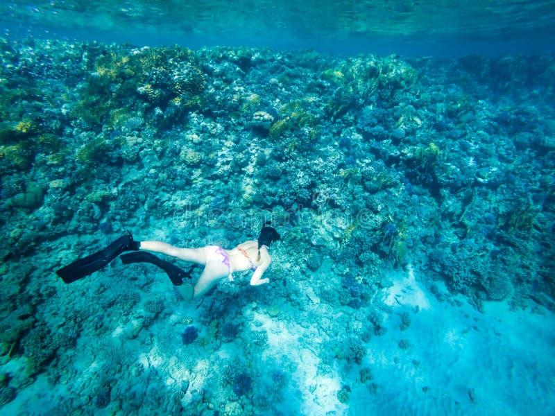 Touristisches schnorchelndes Türkis-Rotes Meer Ägypten stockfotos