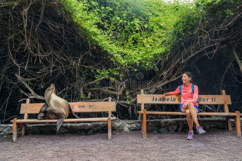 Touristisches Sitzen Galapagos auf Bank mit Seelöwe und -leguan auf Isabela Island stockbild