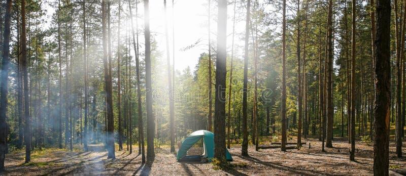 Touristisches Zelt im Kiefernwald an den Strahlen der Sonne lizenzfreies stockfoto
