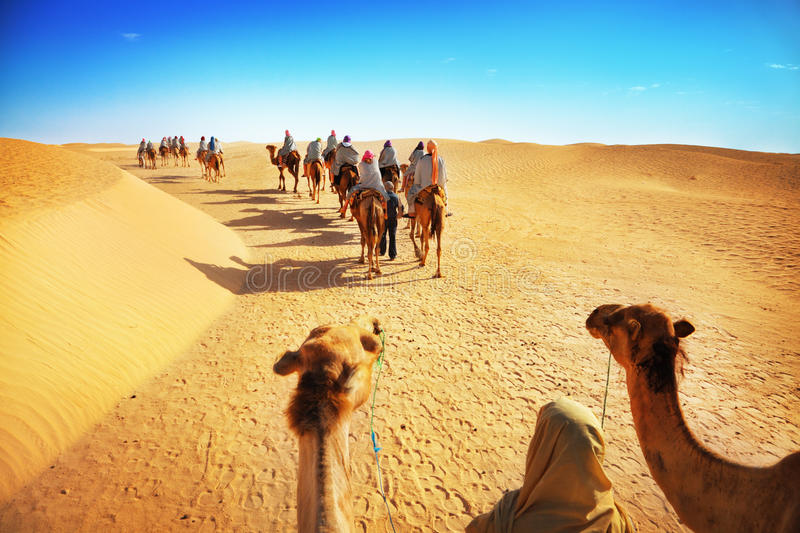Tourists on camels stock images