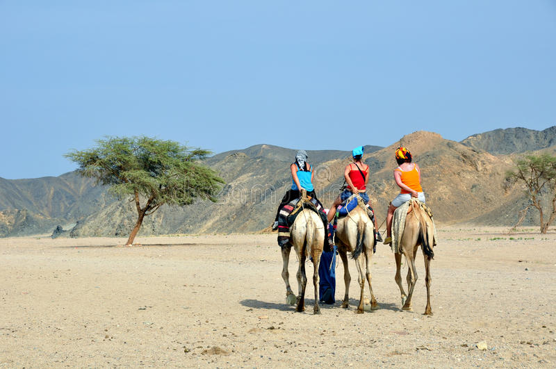 Tourists on camel. For desert tour royalty free stock photo