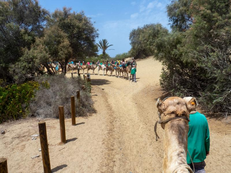 Tourists on camels at Camel Safari Park, Gran Canaria. Gran Canaria/Spain - August 16 2019: Camel Safari Park is a safari adventure park located in the nature royalty free stock images