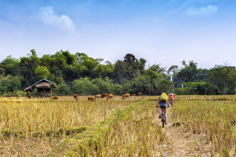 Tourists Cycling in Vang Vieng, Laos stock photography