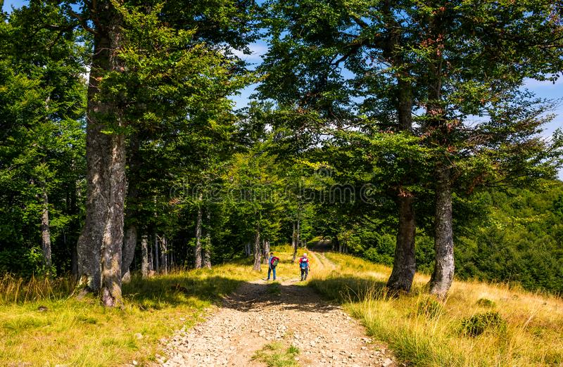 Tourists on a dirt road through beech forest royalty free stock photo