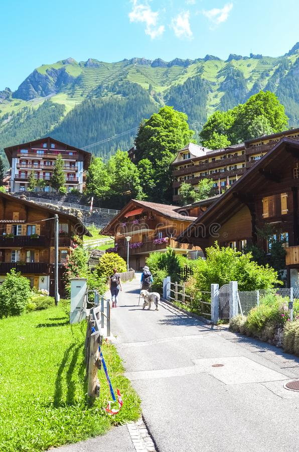 Tourists with dog walking in picturesque Alpine village Wengen in Switzerland in summer season. Mountain chalets surrounded by. Green hilly landscape. Swiss royalty free stock photography