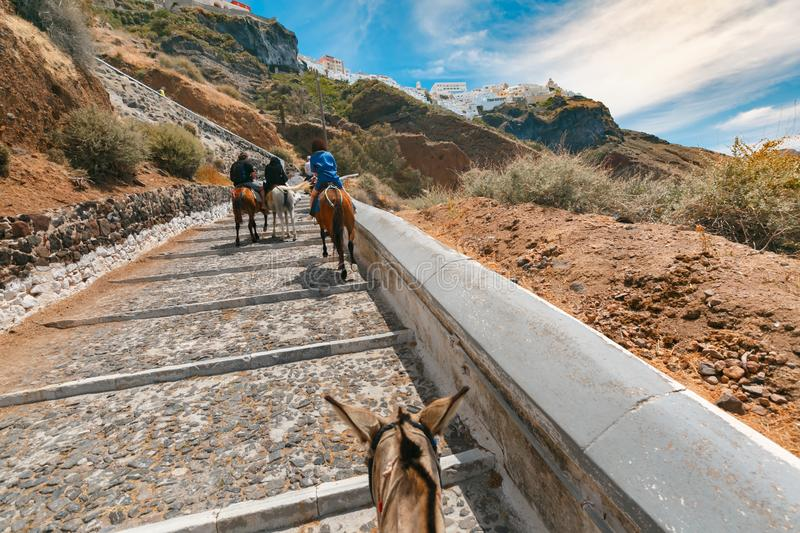 Tourists on donkeys climb the stairs, Fira, Santorini royalty free stock photo