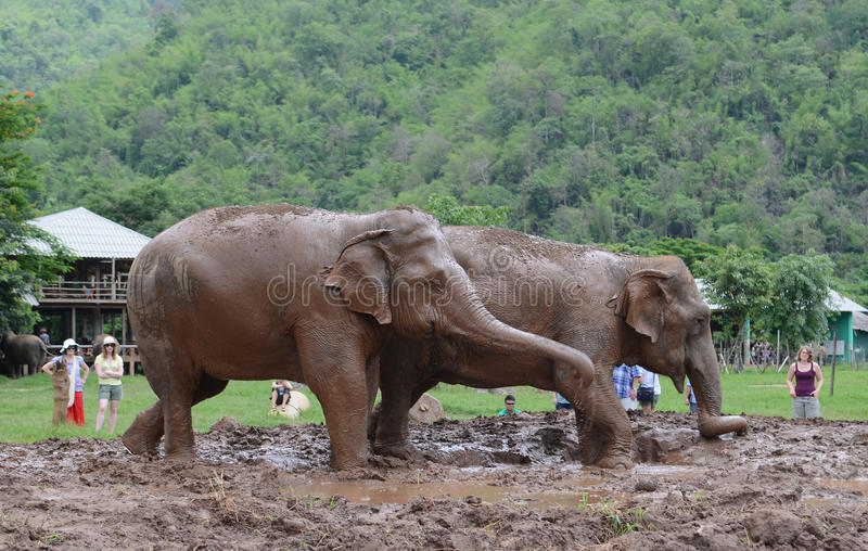 Tourists with elephant royalty free stock image