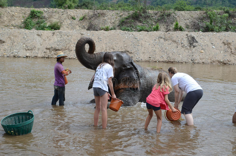 Tourists with elephant royalty free stock photo