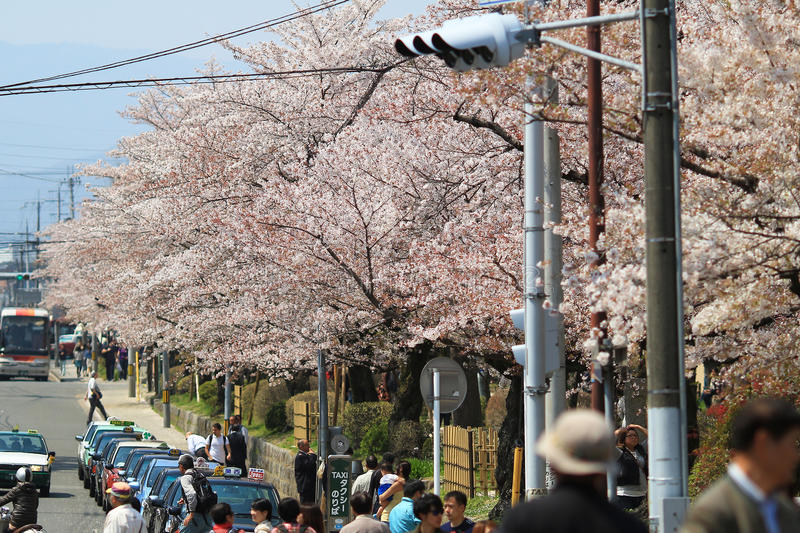Tourists enjoy cherry blossom at Path of Philosophy in Kyoto. It is a pedestrian path that follows a cherry-tree-lined canal in Kyoto royalty free stock photo