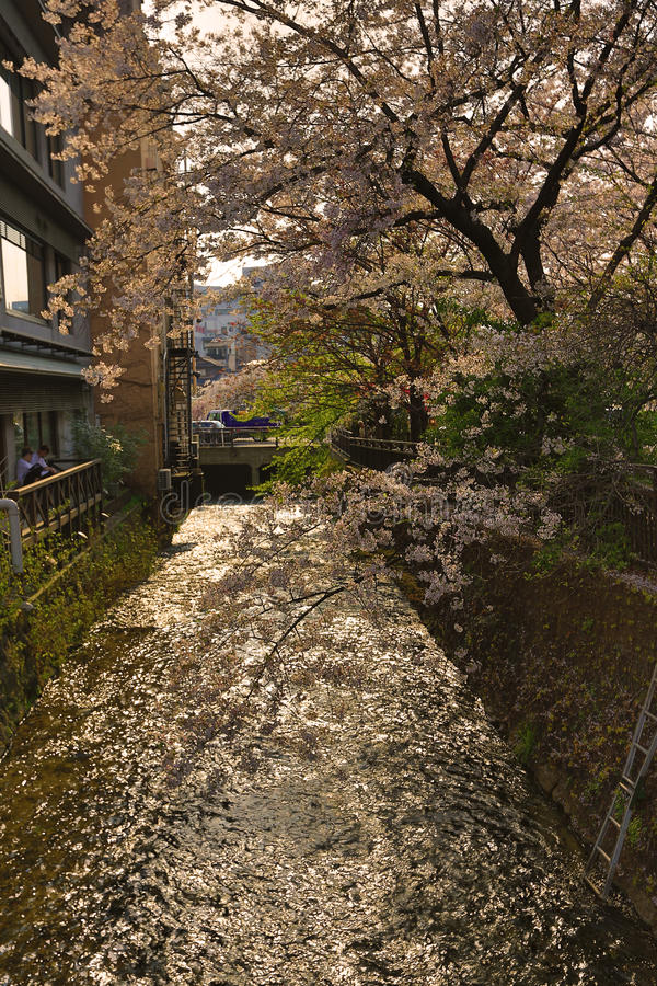 Tourists enjoy cherry blossom at Path of Philosophy in Kyoto. It is a pedestrian path that follows a cherry-tree-lined canal in Kyoto royalty free stock images