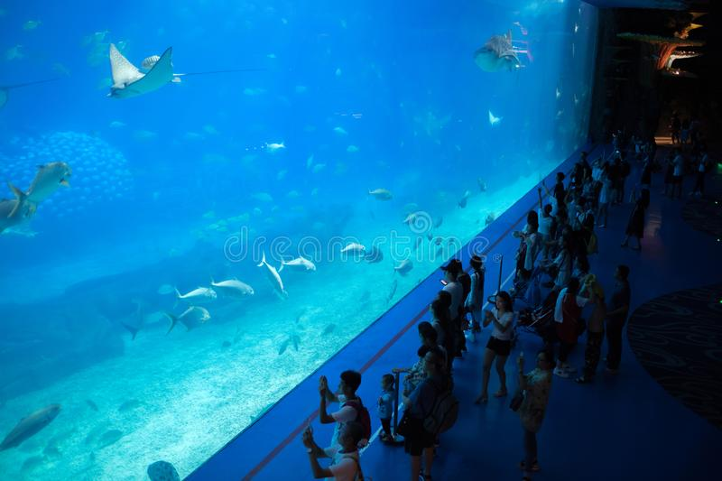 Tourists in front of world`s largest aquarium stock photos