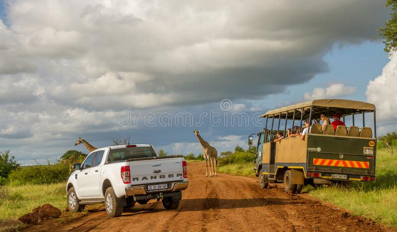 Tourists on a game drive in the Kruger Park in South Africa. Komatipoort, South Africa - January 16, 2020: unidentified tourists enjoy a game viewing drive in royalty free stock images