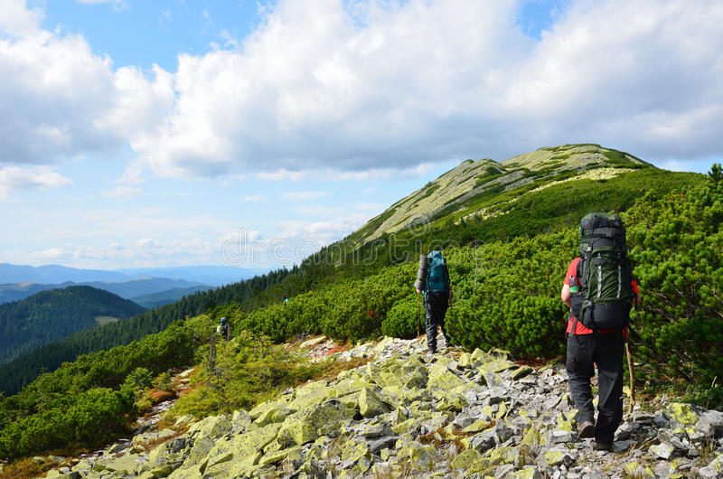 Tourists hiking in the Carpathian mountains. stock photo