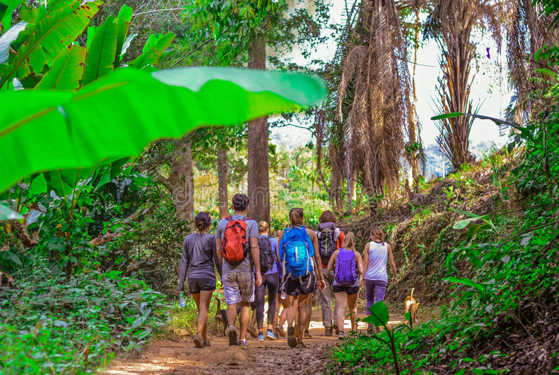 Tourists hiking in the deep jungle of the Khao Yai national park in Thailand. Asia stock photos