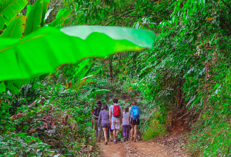 Tourists hiking in the deep jungle of the Khao Yai national park in Thailand. Asia royalty free stock photography
