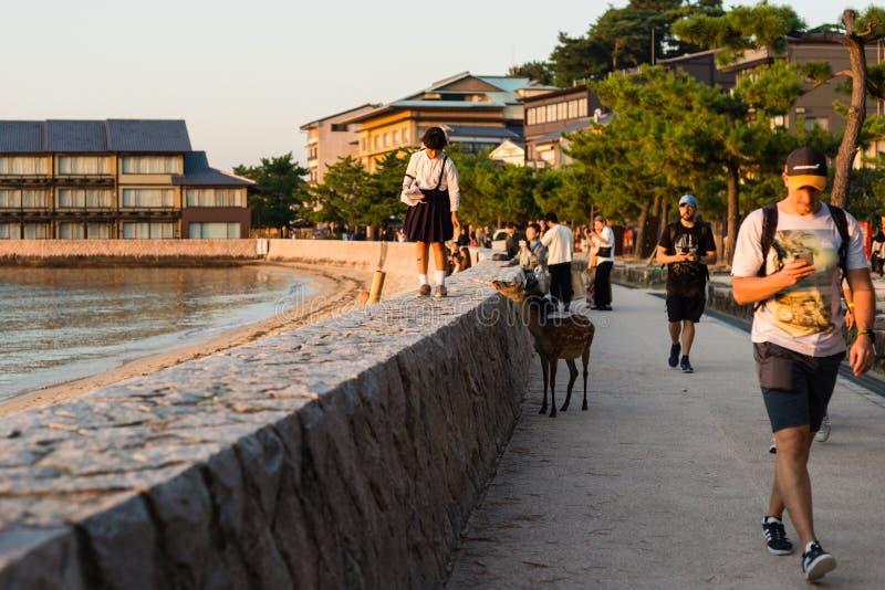 Tourists at miyajima itsukushima island. Walking the esplanade in the afternoon light stock photos