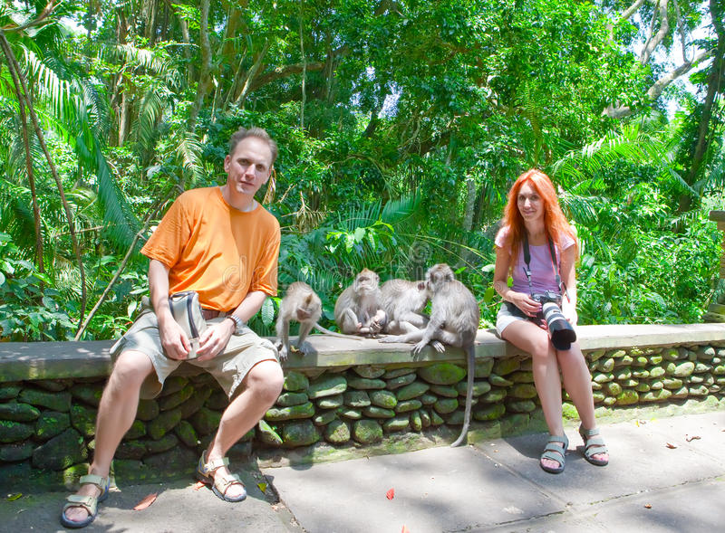 Tourists are photographed with monkeys royalty free stock photos