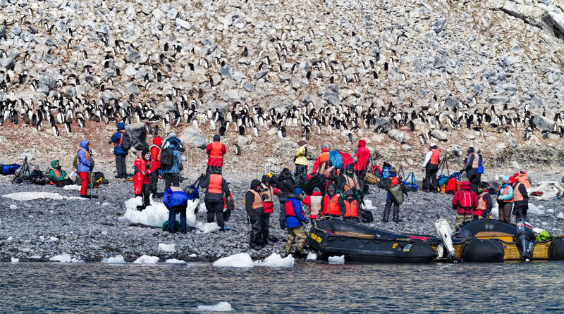 Tourists photographing penguins stock photo