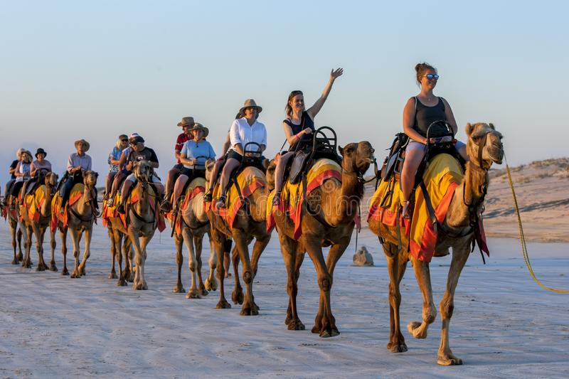 Tourists ride a team of camels along a beach in Australia. royalty free stock image