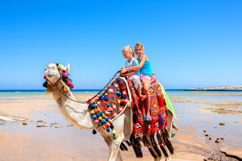 Tourists riding camel on the beach of Egypt. stock photos