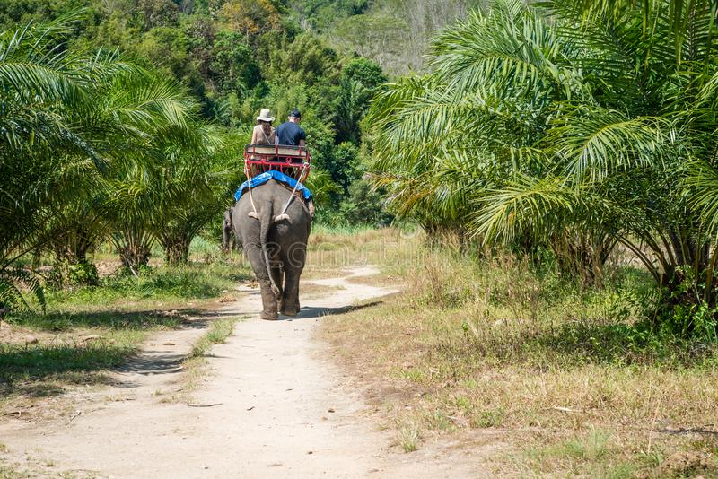 Elephant riding by tourists in tropical green palms and trees. Tourists are riding an elephant in tropical green fields with palms trees in Thailand stock images