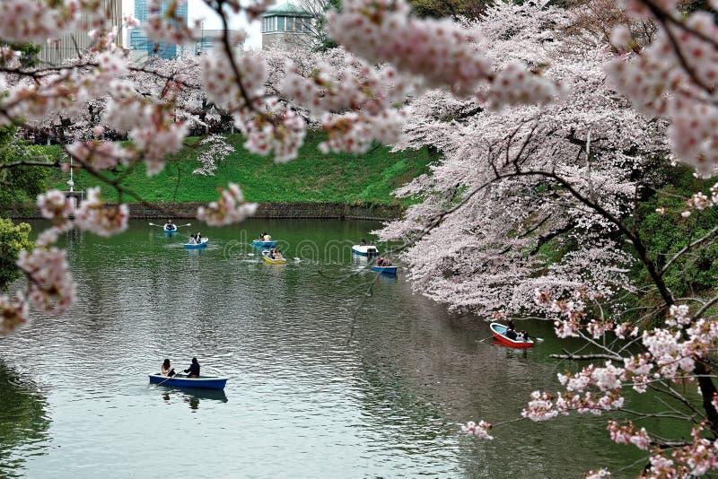 Tourists rowing boats merrily on a canal beneath beautiful sakura trees in Chidorigafuchi Park. Tokyo ( blurred background ) ~ Sakura hanami ( viewing cherry stock photography
