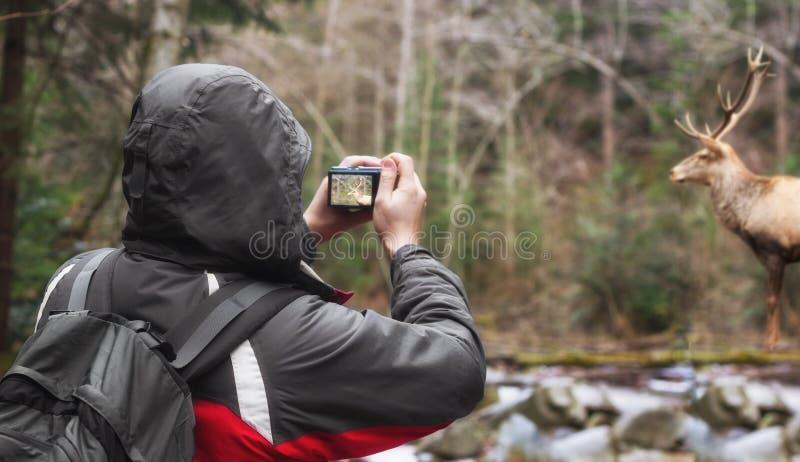 Tourists take photo deer. A Tourists take photo deer royalty free stock image