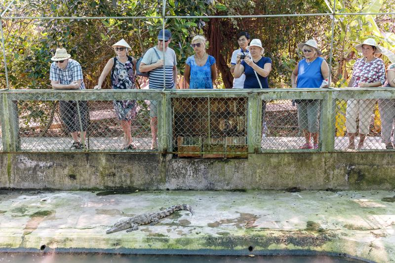 Tourists take pictures of crocodiles in a farm near Mekong river in Vietnam stock photo