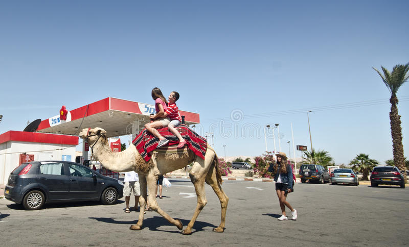 Tourists taking a camel ride royalty free stock image