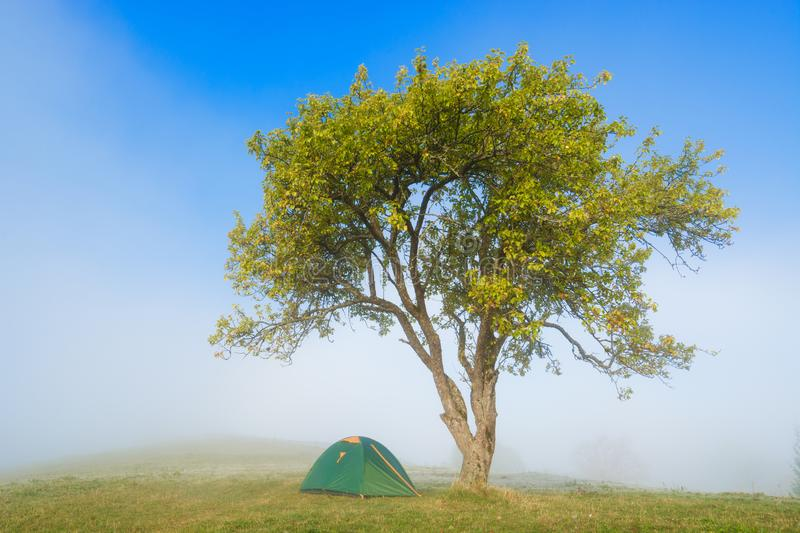 Tourists tent under the tree in a morning valley royalty free stock images