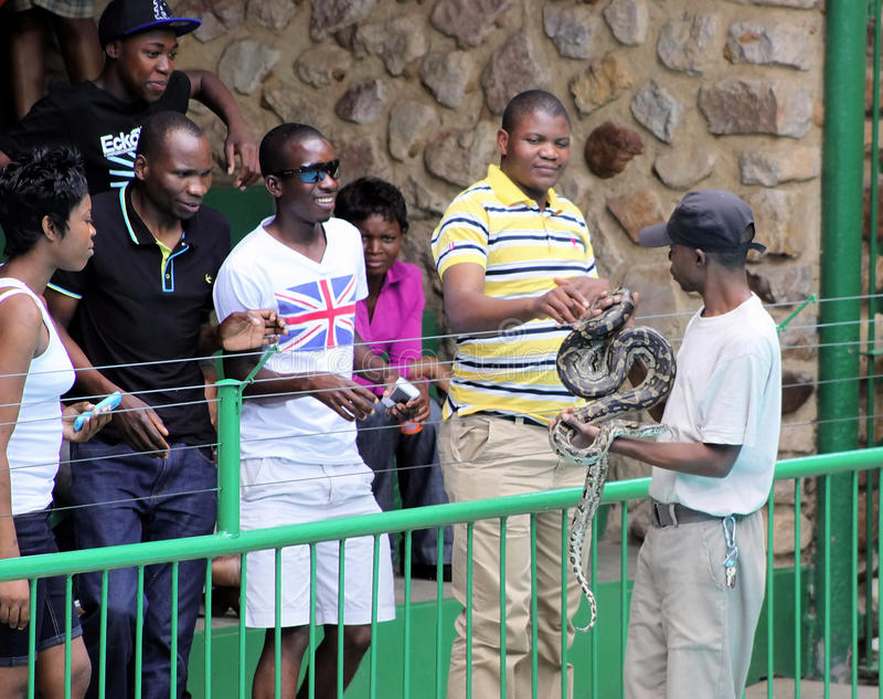 Tourists Touching Python. An African Rock Python Being Displayed to Tourists and Allowed to Touch its Skin at Hartbeespoortdam Snake and Animal Park stock images