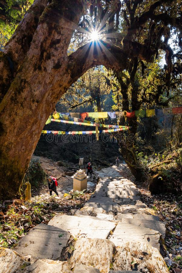 Tourists trekking along Pooh Hill trekking route with nature forest environment at Nepal royalty free stock photo