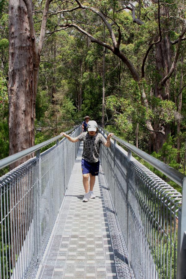 Free Tourists Walk The Tree Top Walk In Walpole Nornalup, Western Australia Royalty Free Stock Images - 66145519