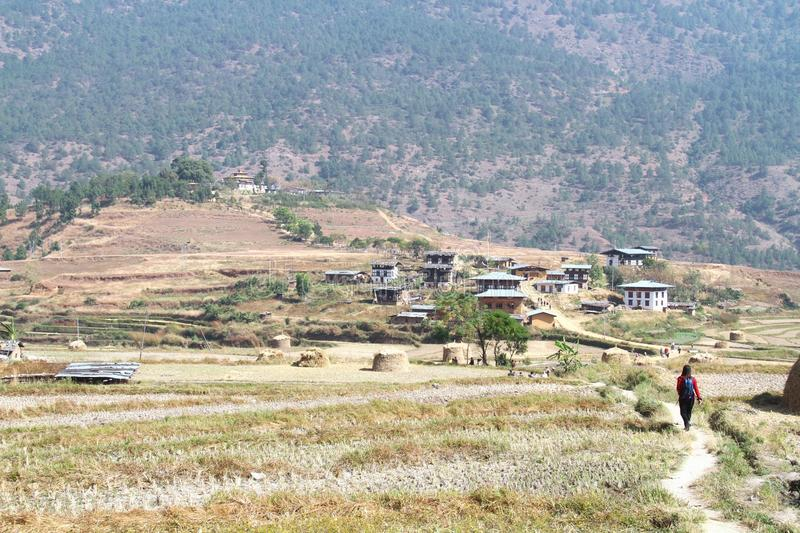 Tourists walking through the post harvest rice field heading to. Chimi Lakhang or Chime Lhakhang temple, Buddhist monastery in Punakha District, Bhutan royalty free stock photography
