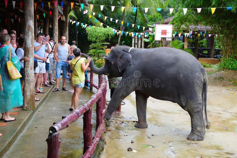 Tourists watch the elephant show in the pranks of Phang Nga in Thailand. An elephant kisses a woman in gratitude for food. Photo of 10/23/2016 royalty free stock image