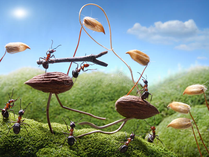 Tournament ants on birds, ant tales royalty free stock photos