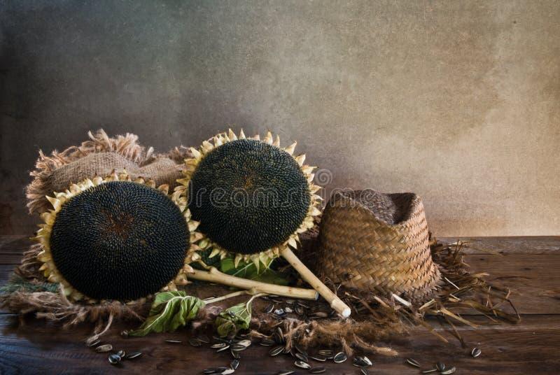 Tournesol avec des graines de tournesol photo libre de droits