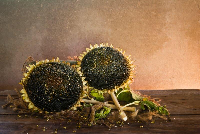 Tournesol avec des graines de tournesol photos stock