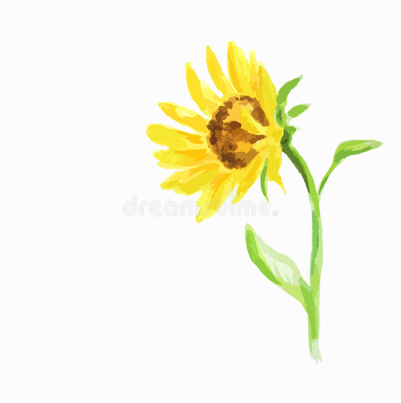 Tournesol d'aquarelle illustration de vecteur