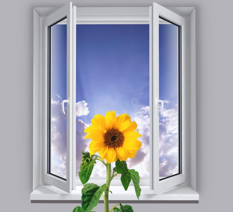 Tournesol dans la fenêtre image stock